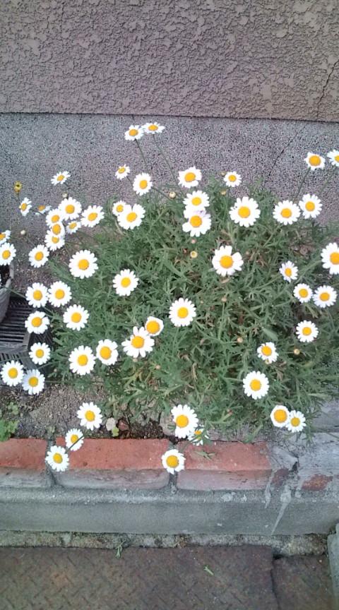 春はいいな♪花はいいな♪